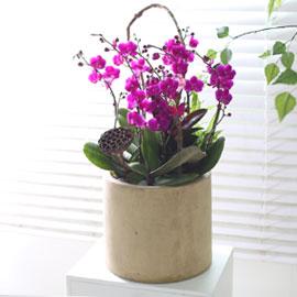 휴식이 되는 생활공간 - 원통화기의 만천홍 꽃배달하시려면 이미지를 클릭해주세요