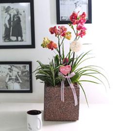 휴식이 되는 생활공간 - 살구빛 미니 호접_오렌지 꽃배달하시려면 이미지를 클릭해주세요