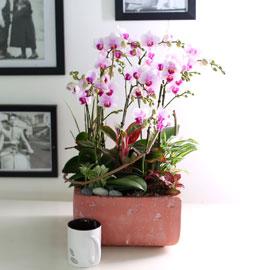 휴식이 되는 생활공간 - 빨간 빈티지 화분의 Smile moon_리틀잼 꽃배달하시려면 이미지를 클릭해주세요
