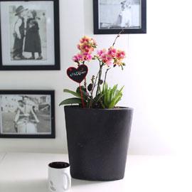 휴식이 되는 생활공간 - 독특한 화기의 살구빛 서양란_금나비(***화기변경***) 꽃배달하시려면 이미지를 클릭해주세요