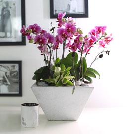 휴식이 되는 생활공간 - 사각 FRP 화분의 썬뷰티 꽃배달하시려면 이미지를 클릭해주세요
