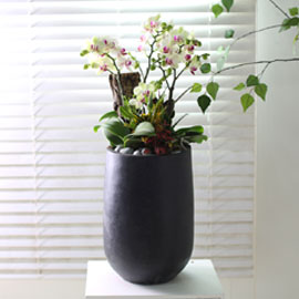 휴식이 되는 생활공간 - 원형 화기에 심은 그린베어 꽃배달하시려면 이미지를 클릭해주세요
