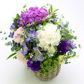 프쉬케 어느날 - Violet White 꽃배달하시려면 이미지를 클릭해주세요