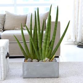 도시 정원 - 실내공기 정화하자 - 공간에 멋스러움을 가득 스튜키대품 꽃배달하시려면 이미지를 클릭해주세요