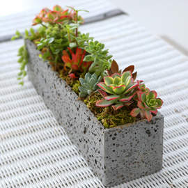 Succulent Plant (다육식물) - 빛깔이 고운식물 다육정원 직사각 꽃배달하시려면 이미지를 클릭해주세요