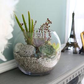 다육식물 인테리어  - like sun 꽃배달하시려면 이미지를 클릭해주세요