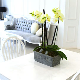 Living with flowers everyday - Newyork style Orchid 포춘 꽃배달하시려면 이미지를 클릭해주세요