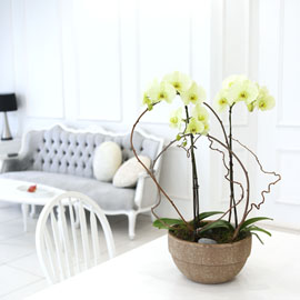 Living with flowers everyday - Newyork style Orchid 그린애플 꽃배달하시려면 이미지를 클릭해주세요