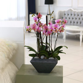 Living with flowers everyday - Newyork style Orchid 달링 꽃배달하시려면 이미지를 클릭해주세요