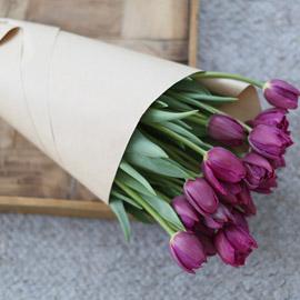 Spring&Sweet - oh my lovely tulip 꽃배달하시려면 이미지를 클릭해주세요