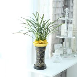 시선을 머물게 하는 실내 식물 -맑고 깨끗한 난꽃을 가진 철골소심 꽃배달하시려면 이미지를 클릭해주세요