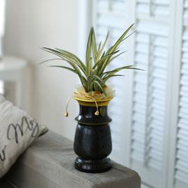 시선을 머물게 하는 실내 식물 - 고급스러운 분위기에 동양란(사항수) 꽃배달하시려면 이미지를 클릭해주세요