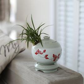 시선을 머물게 하는 실내 식물  - 고급 항아리 도자기분에 동양란(천초) 꽃배달하시려면 이미지를 클릭해주세요