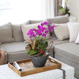시선을 머물게 하는 실내 식물 - 인기가 많고  세련된 만천홍 꽃배달하시려면 이미지를 클릭해주세요