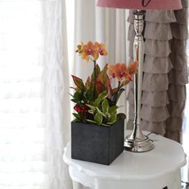 모던한 화분에 내츄럴하게 어렌지된 주황 호접란 꽃배달하시려면 이미지를 클릭해주세요