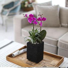 시선을 머물게 하는 실내 식물 - 화려한 멋이 있는 공간, 핑크 만천홍(빈티지 숯화분) 꽃배달하시려면 이미지를 클릭해주세요