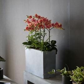 Graceful orchid flowers - 주황빛깔 금나비 꽃배달하시려면 이미지를 클릭해주세요