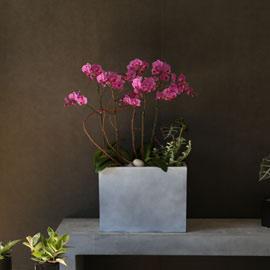 Graceful orchid flowers - 공간을 매력적으로 보이게하는 서양란 웨딩 꽃배달하시려면 이미지를 클릭해주세요