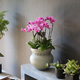 Graceful orchid flowers - 로맨틱 고급서양란 유니웨딩 (* 이미지 화기 품절로 변경됨) 꽃배달하시려면 이미지를 클릭해주세요