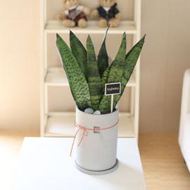 special 공기정화 식물 - 푸른 숲속을 닮은 제로니카 꽃배달하시려면 이미지를 클릭해주세요