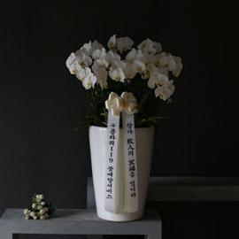 조문용 백색호접(2016.NO 1) 꽃배달하시려면 이미지를 클릭해주세요