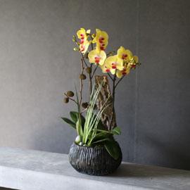 Decorating with Orchids(서양란) -  새로운 시선으로 골드스타 꽃배달하시려면 이미지를 클릭해주세요