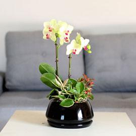 감사의 마음을 담아 - 심플한 블랙화기와 노랑호접 꽃배달하시려면 이미지를 클릭해주세요
