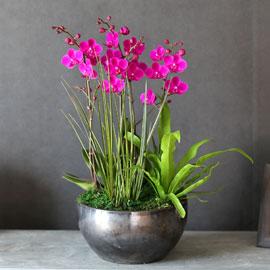 감사의 마음을 담아 - 꽃잎이 예쁜 만천홍 꽃배달하시려면 이미지를 클릭해주세요