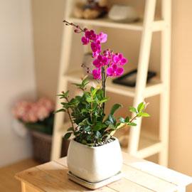 감사의 마음을 담아 - 화이트 화기에 담긴 매혹적인 만천홍(* 화기 신제품으로 변경) 꽃배달하시려면 이미지를 클릭해주세요