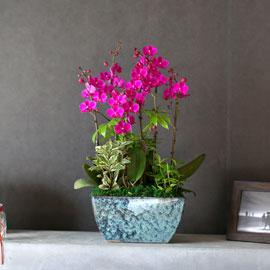 감사의 마음을 담아 - 고풍적인 화기와 매력적인 만천홍(*  화기 다른 색상으로 변동) 꽃배달하시려면 이미지를 클릭해주세요