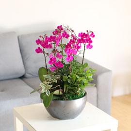 감사의마음을 담아 - 가장 인기가 좋은 서양란 만천홍 꽃배달하시려면 이미지를 클릭해주세요