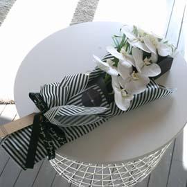 MARCH  - White Phalaenopsis 꽃배달하시려면 이미지를 클릭해주세요