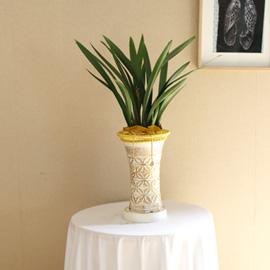승진축하에 좋은 동양란 - 보세 꽃배달하시려면 이미지를 클릭해주세요