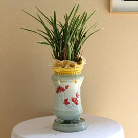 승진축하에 좋은 동양란 - 황룡관 [화기변경] 꽃배달하시려면 이미지를 클릭해주세요