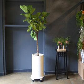 Office & nature 떡갈나무(대) 꽃배달하시려면 이미지를 클릭해주세요