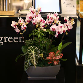 아름다움이 있는 공간 - 루치아 핑크 꽃배달하시려면 이미지를 클릭해주세요