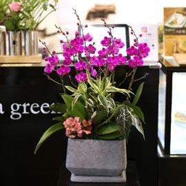 아름다움이 있는 공간 - 만천홍 꽃배달하시려면 이미지를 클릭해주세요