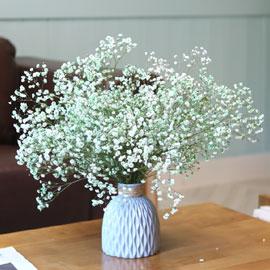 봄,꽃들의 축제  -Spring vacation 꽃배달하시려면 이미지를 클릭해주세요