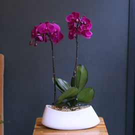 Office & nature Pink orchid **화기변경** 꽃배달하시려면 이미지를 클릭해주세요