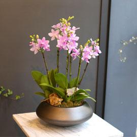 Office & nature - 수지같이 청순한 비바체 꽃배달하시려면 이미지를 클릭해주세요