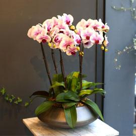 Office & nature - 세련된 칼라의 마운트립 꽃배달하시려면 이미지를 클릭해주세요