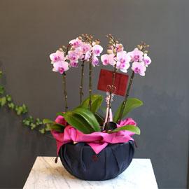 Office & nature - 레아(보자기 포장) 꽃배달하시려면 이미지를 클릭해주세요