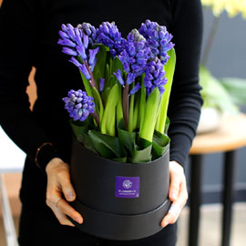 White day Spring again 꽃배달하시려면 이미지를 클릭해주세요