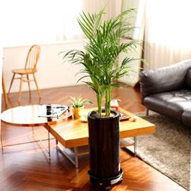 Office & Nature 아레카야자(소) (서울수도권 이외의 지역에서 화분이 변경될 수 있습니다) 꽃배달하시려면 이미지를 클릭해주세요