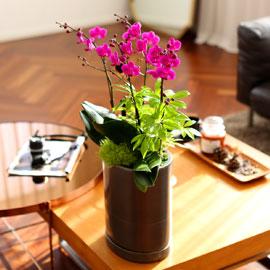 Office & Nature 만천홍 (서울 수도권 이외의 지역에서 화분이 변경될 수 있습니다) 꽃배달하시려면 이미지를 클릭해주세요