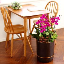 Office & Nature 만천홍(대) (서울수도권 이외의 지역에서 화분이 변경될 수 있습니다) 꽃배달하시려면 이미지를 클릭해주세요