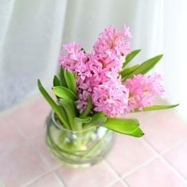 '(必)환경'시대 오아시스없는 플라워화병 - I like the pink Hyacinth 꽃배달하시려면 이미지를 클릭해주세요