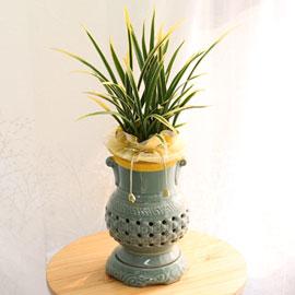 선이 아름다운 투각분 동양란 - 금황 꽃배달하시려면 이미지를 클릭해주세요