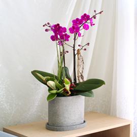 봄 향기 가득한 따뜻한 만천홍 꽃배달하시려면 이미지를 클릭해주세요