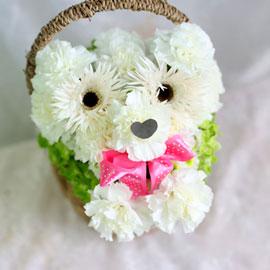 웃으면 복이와요 - 우리집 강아지 재롱이 꽃배달하시려면 이미지를 클릭해주세요
